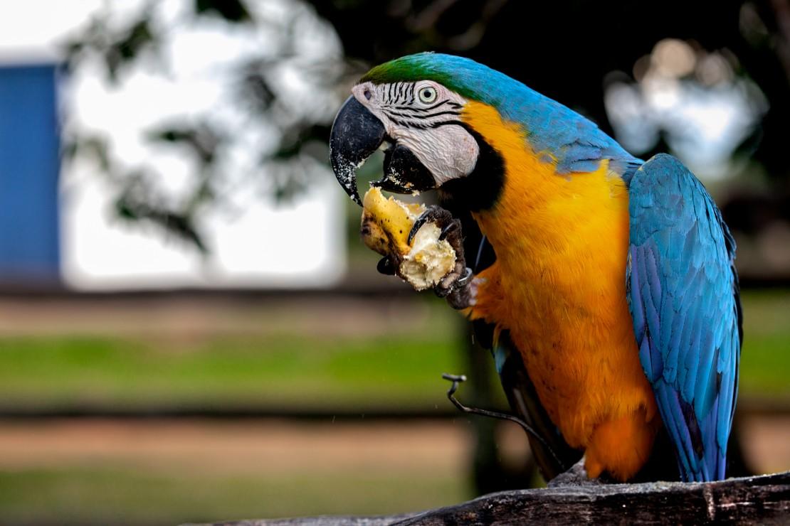 Bonito e Pantanal Food Safari ESPECIAL