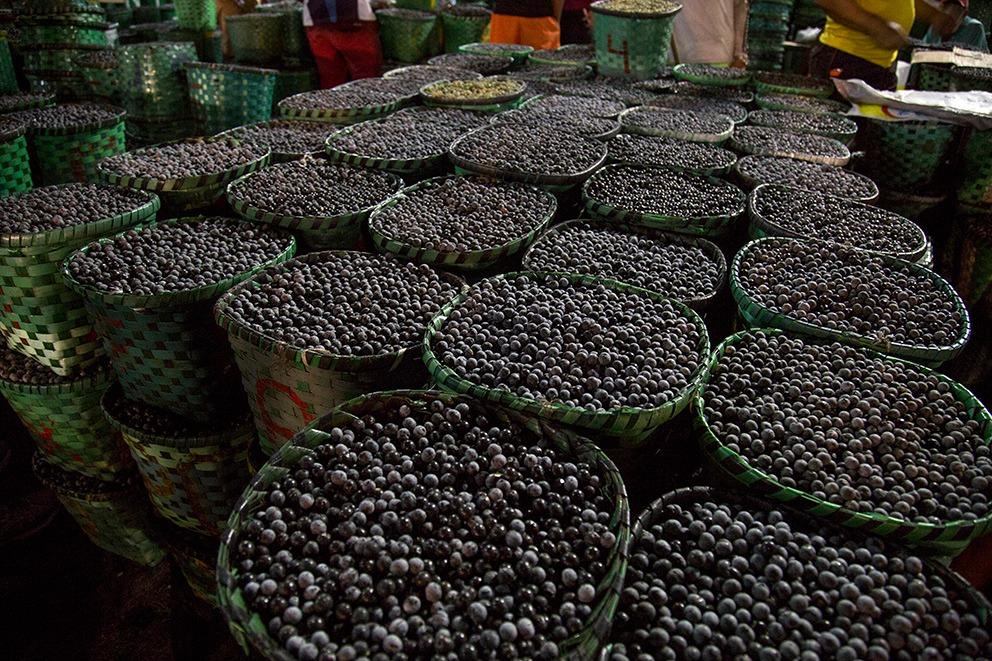 Food Safari Amazonia Belem Isla del Marajo